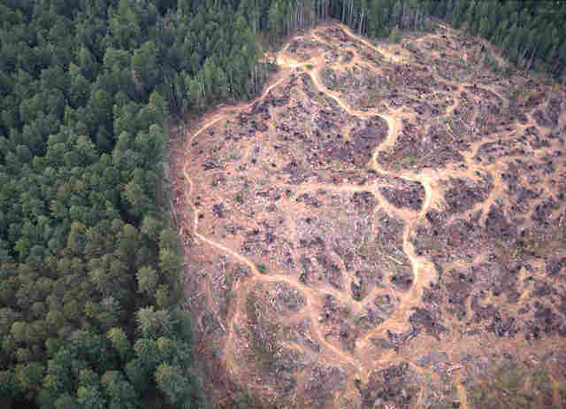 More Clearcuts